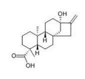 Stevia Leaf Extract2