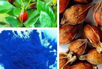 Gardenia pigment blue