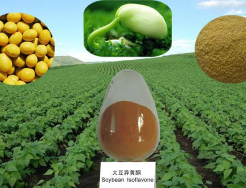 Why the herbal natural Ingredients Hu Nan Province is better Than Xi An Province?