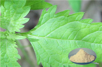 Oridonin extract