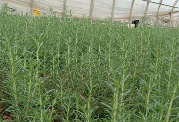 Plantation - Plantnat