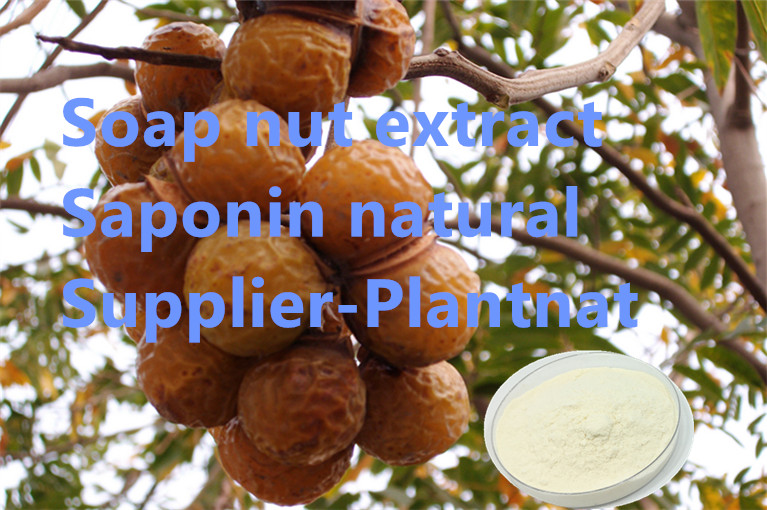 saponin supplier| soap nut extract manufacturer| costmetics additive