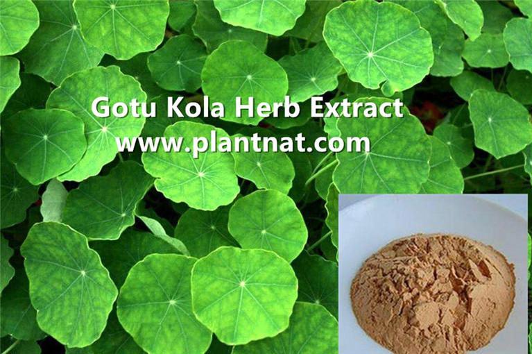 gotu kola herbal extract