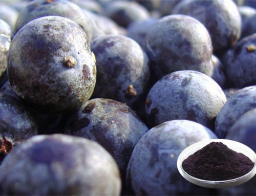What you need to know about the Blueberry Extract!