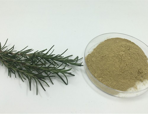 All about the Rosemary Extract!