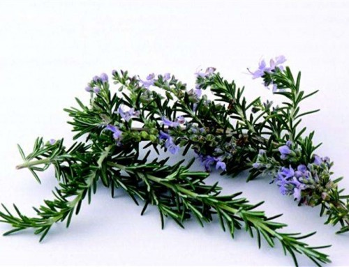 If rosemary extract can use as feed additive?