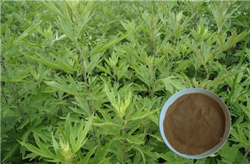 Blumea Balsamifera extract