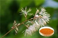 macleaya cordata extract