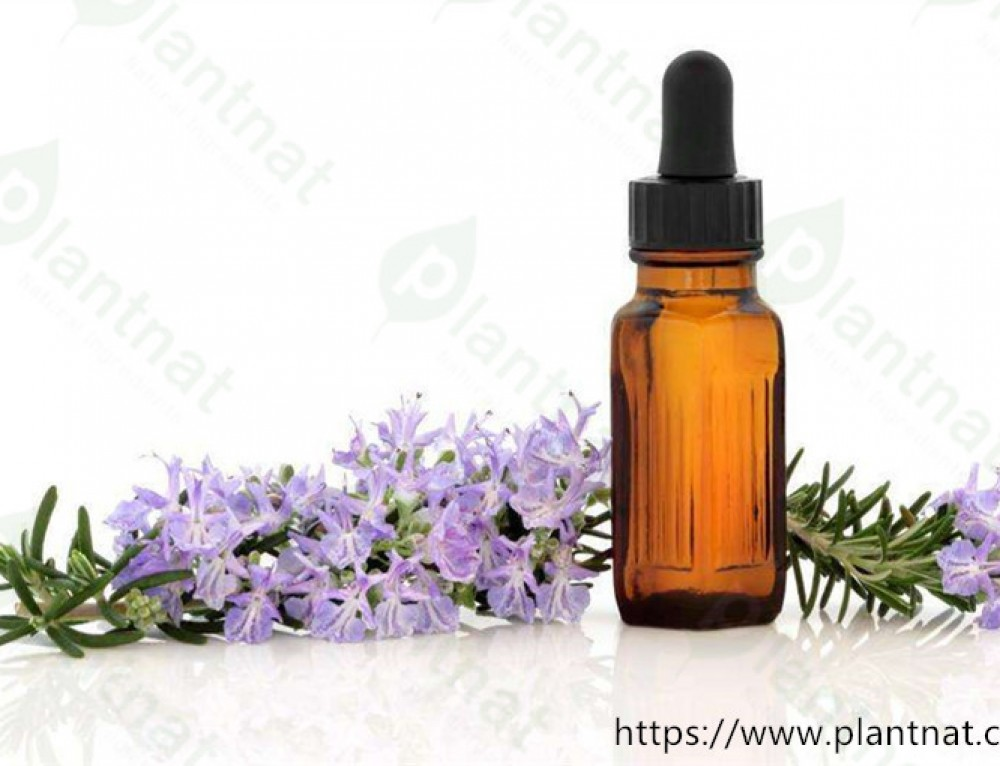 18 points of Rosemary Oil Benefits