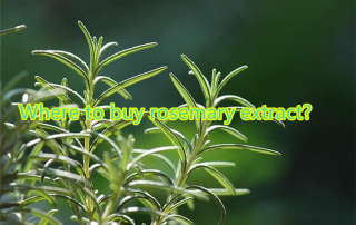 buy rosemary extract