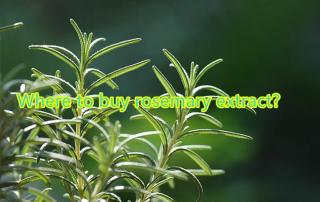 buy rosemary extract