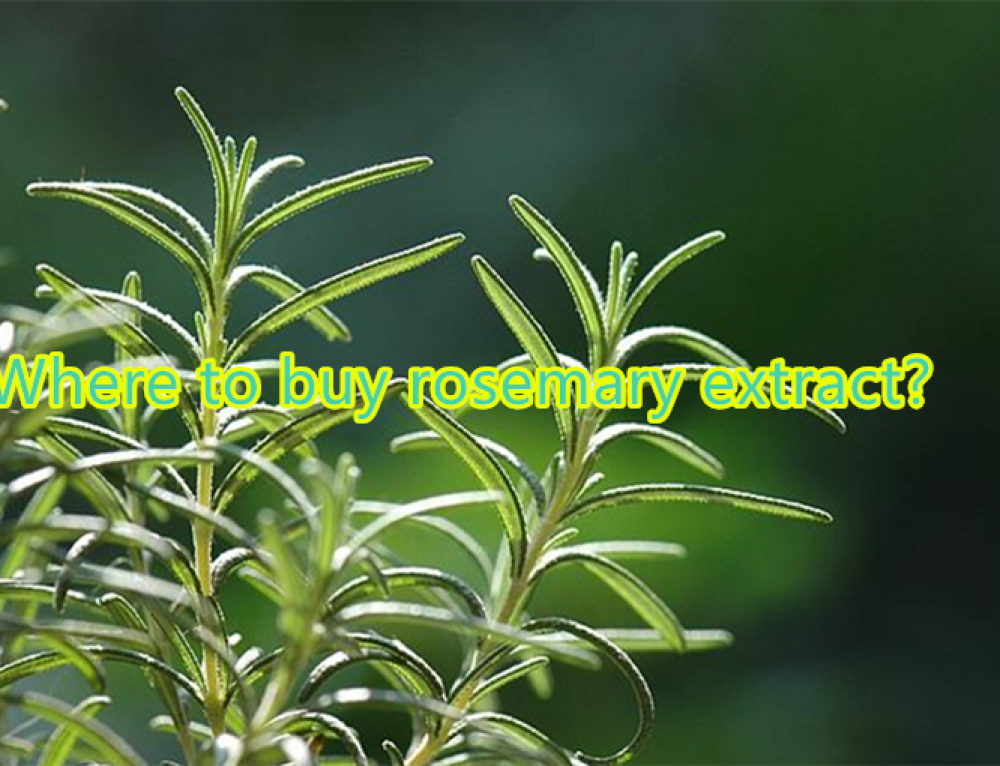 Where can i buy rosemary extract?
