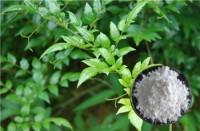 rattan tea extract